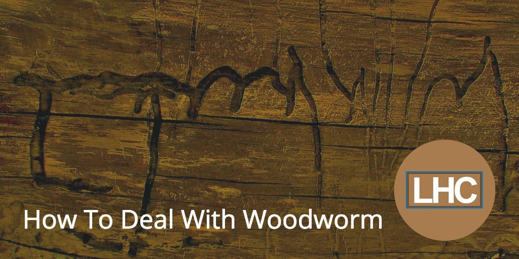 - How To Deal With Woodworm