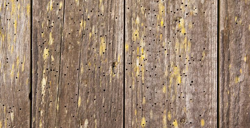 Woodworm treatment London & Home Counties